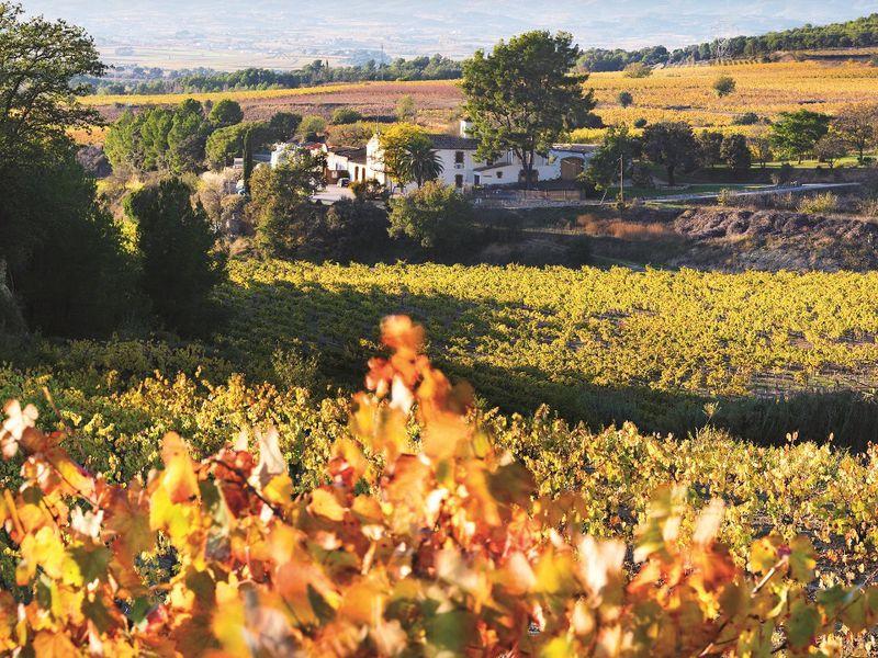 Экскурсия Семейная винодельня идегустация элитного игристого вина