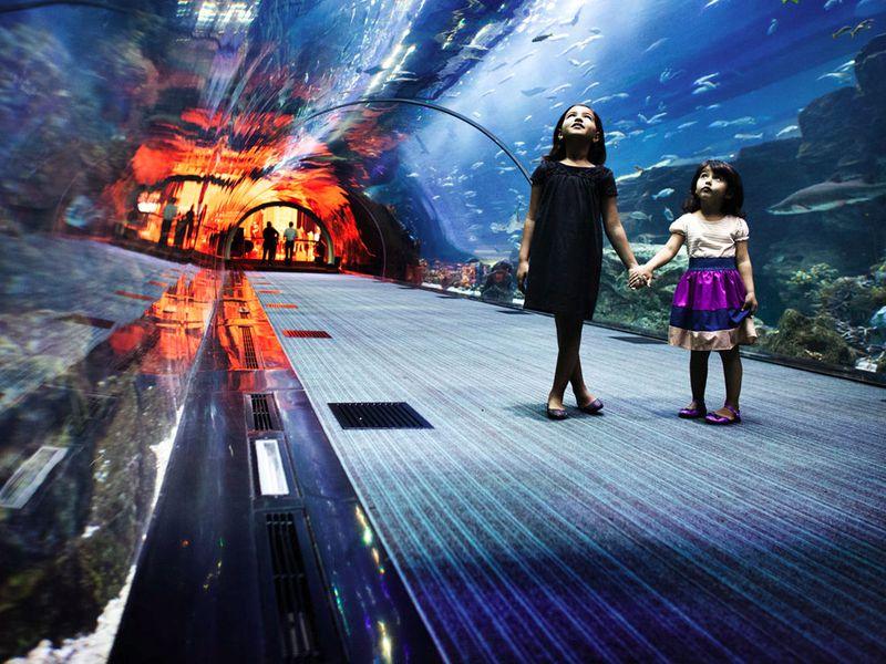 Экскурсия Дубай для детей ивзрослых
