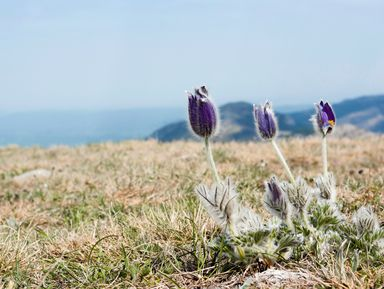 Треккинг к вершине Аю-Даг: туда, где цветут подснежники