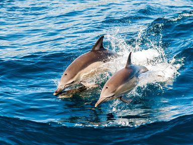 Морская прогулка кдельфинам на катере