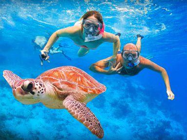 Снорклинг сморскими черепахами вКанкуне