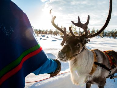Этно-путешествие из Мурманска в деревню саамов