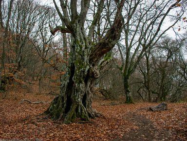 Сказки крымского леса