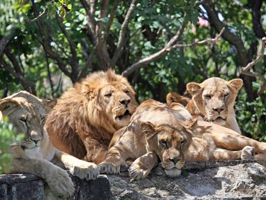 ИзАлушты— вСафари-парк «Тайган»!