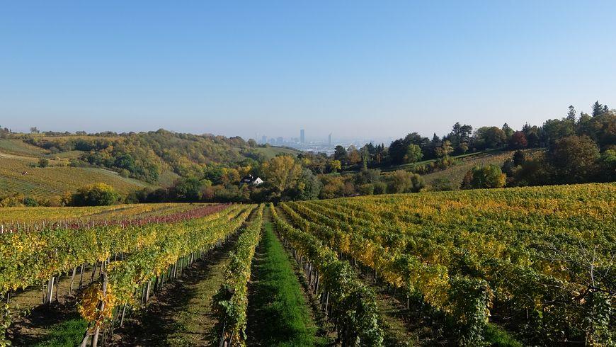 Вена и вино