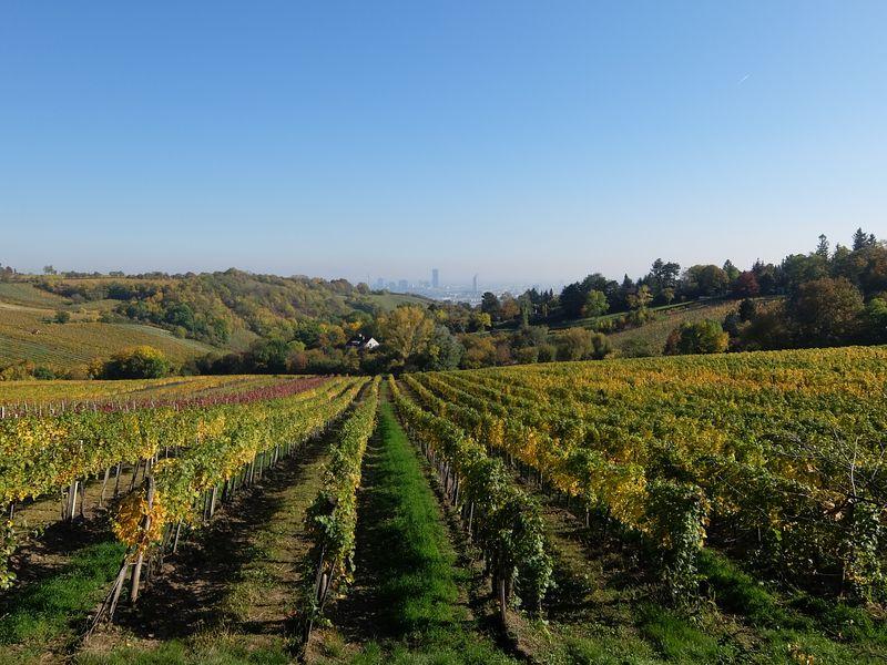 Экскурсия Вена и вино