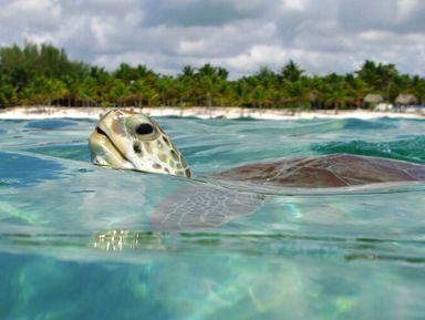 Бухта черепах Акумаль иэко-парк Танка