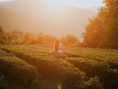Чайные плантации и долина Шахе + фотосессия