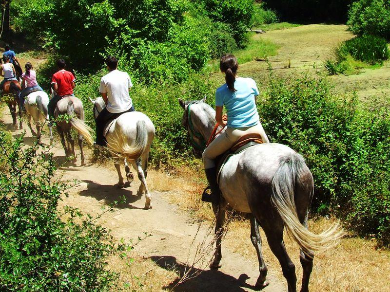Экскурсия Прогулка на лошадях