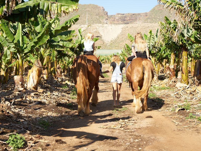 Экскурсия Конная прогулка на Тенерифе
