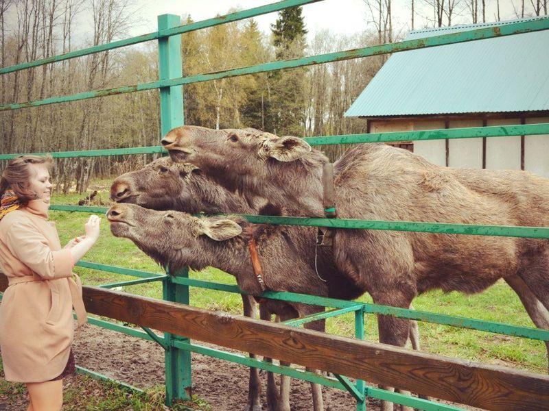 Экскурсия Групповая экскурсия на лосиную ферму и в ювелирную столицу России