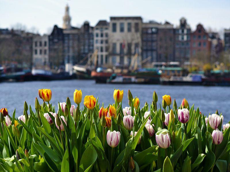 Экскурсия Амстердам пешком инакораблике!