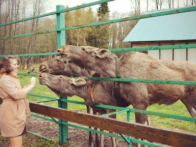 Групповая экскурсия на лосиную ферму и в ювелирную столицу России