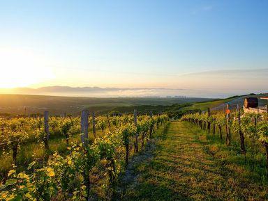 Русская Тоскана: путешествие по винодельням Краснодарского края