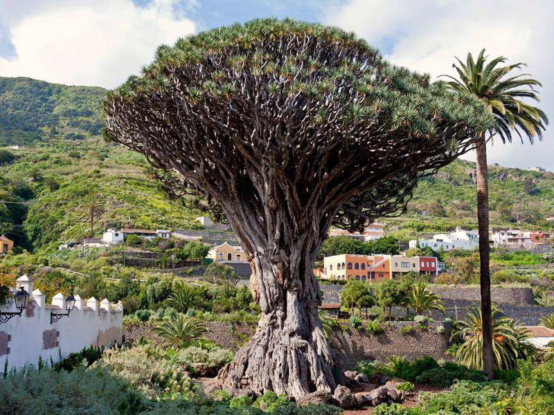 Экскурсия Весь Тенерифе и природный парк Анага за один день!