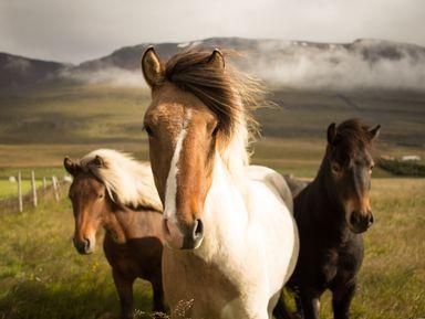 Магическая Исландия: первый день в стране эльфов