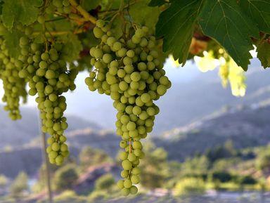 Виноделие Кипра