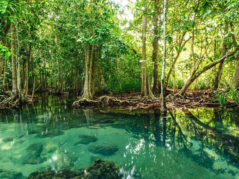 Экскурсия Экспедиция в мангровые джунгли