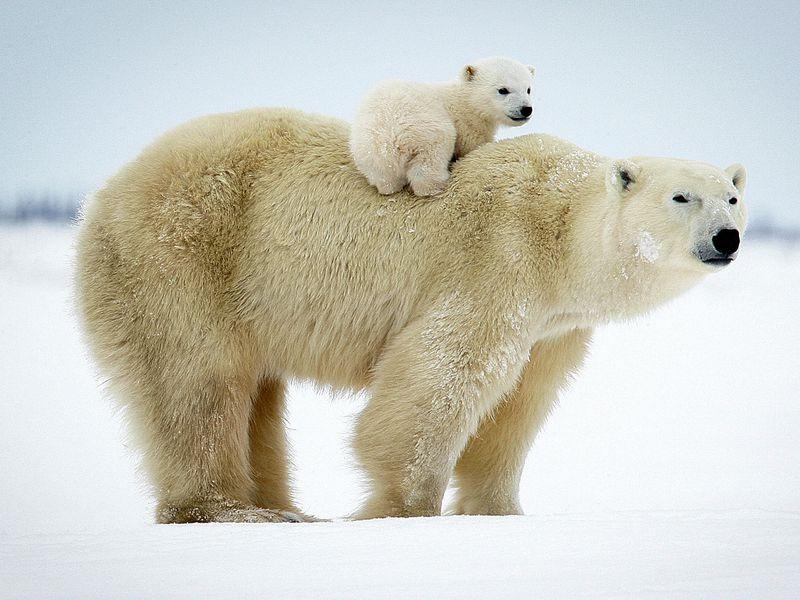 Экскурсия Семейное путешествие помузею Арктики иАнтарктики