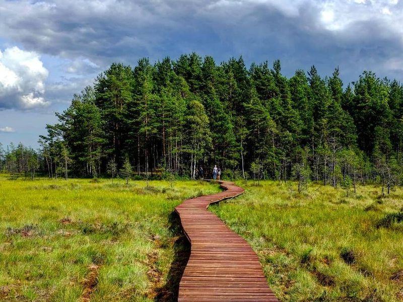 Экскурсия «Сестрорецкое болото»: эко-треккинг ифотосессия