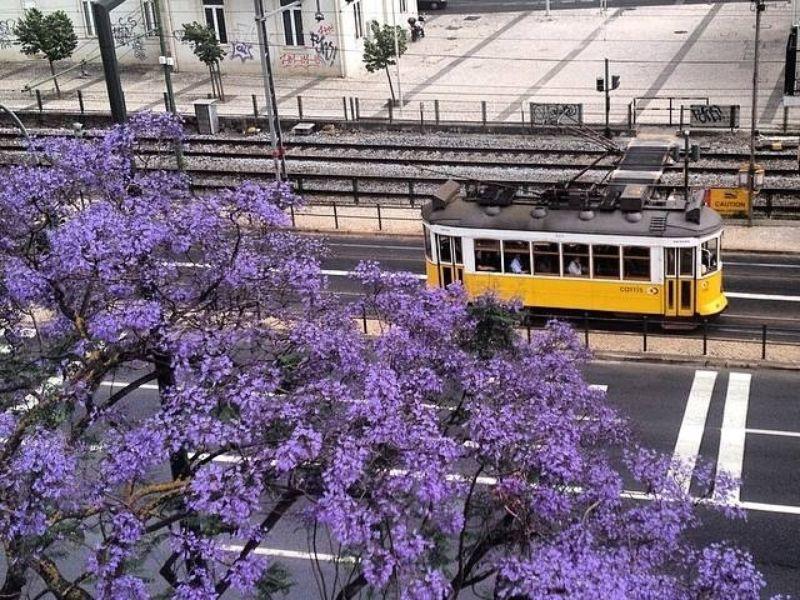 Экскурсия Прекрасный Лиссабон
