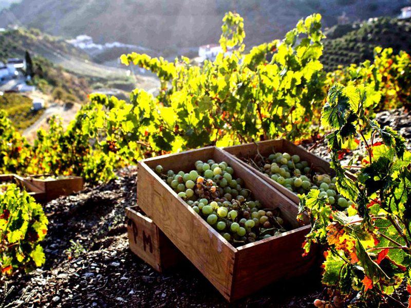 Экскурсия ИзБарселоны— вмир игристого вина ишоколада