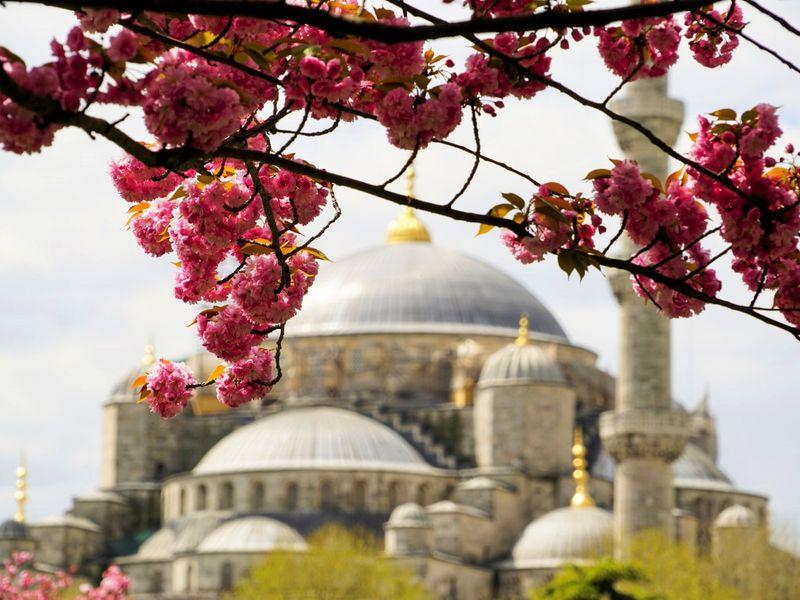 Экскурсия Ежедневная прогулка по Стамбулу