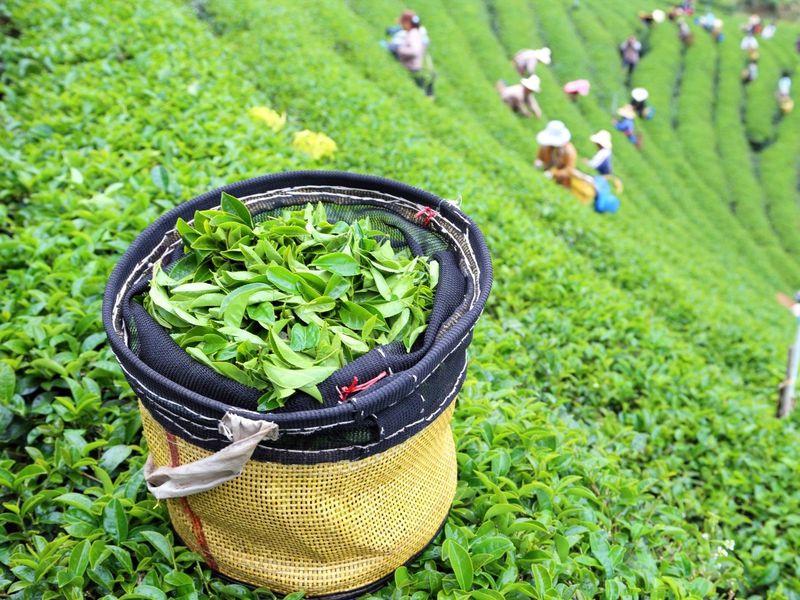 Экскурсия Живописные окрестности Гуанчжоу