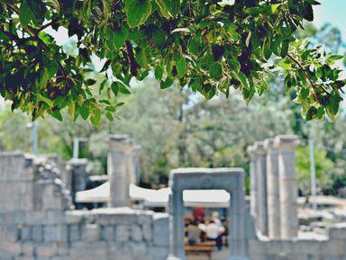 Ботаническая экскурсия по Тель-Авиву. История озеленения города