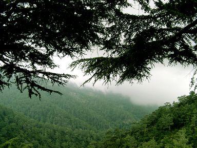 Путешествие по горам Троодос (из любого города Кипра)