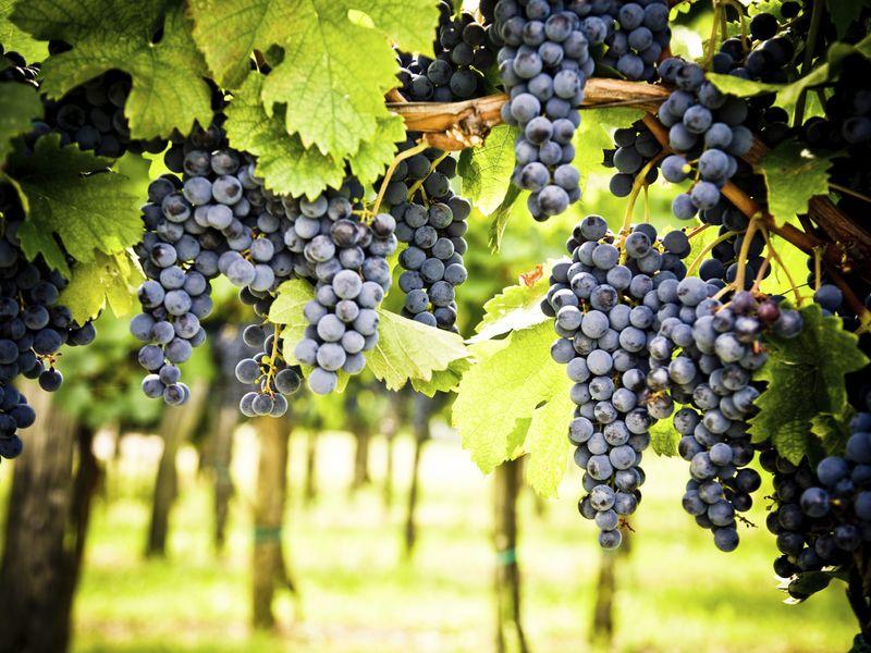 Экскурсия Гастрономическая экскурсия на винодельни Рекены