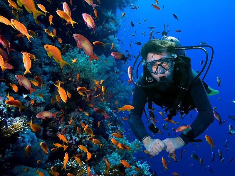 Экскурсия Дайвинг в Средиземном море