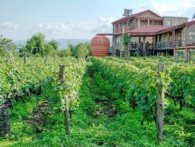 ВКахетию— край виноградной лозы!