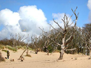 Песчаные дюны Южного Кеннемерланда