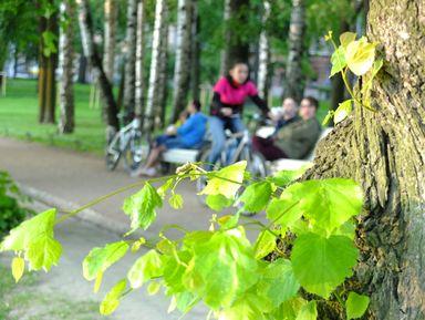 Нетривиальный велосипедный променад