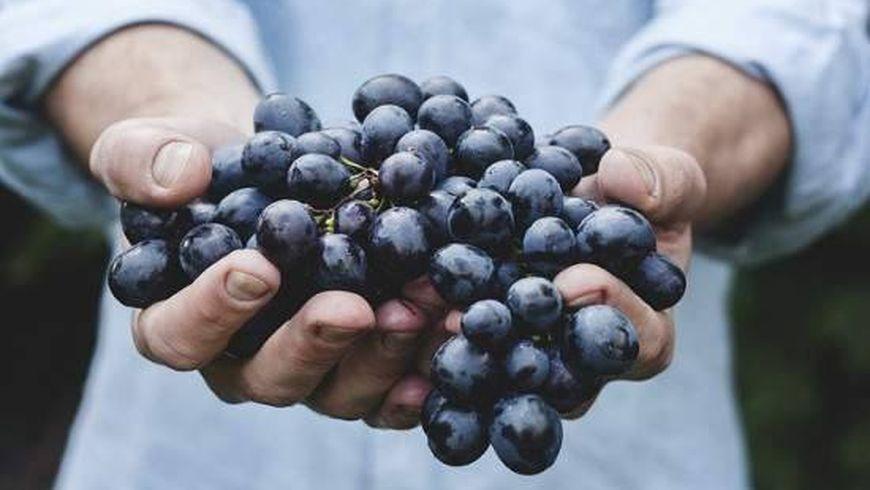 Искусство органического виноделия