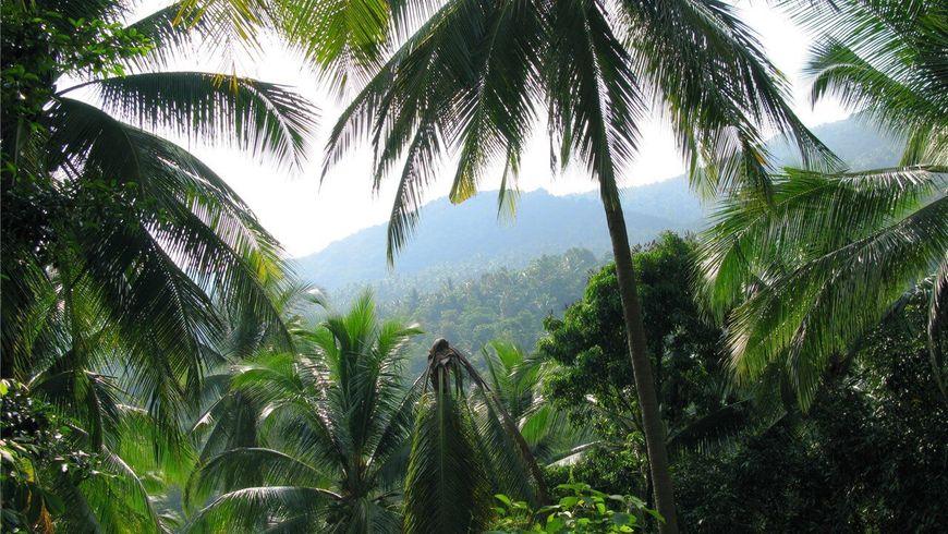 Рай в Сиамском заливе