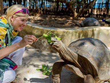 Большие черепахи намаленьком острове Чангу