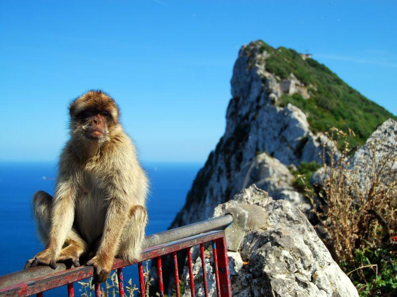 Экскурсия Гибралтар: путешествие к легендарной скале