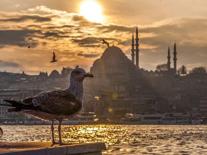 Фото Автомобильное путешествие по Стамбулу
