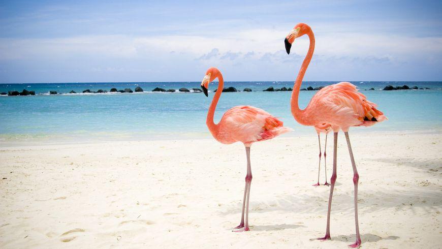 Водные заповедники, Замок пирата и мир животных Мексики