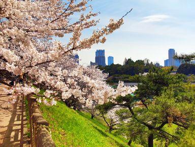 Цветы сакуры в большом Токио