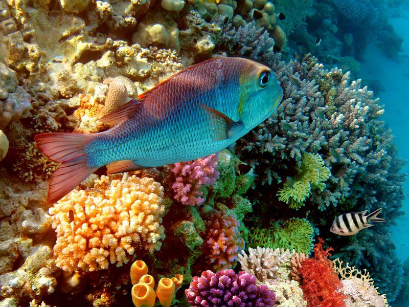 Морская прогулка к Коралловым островам