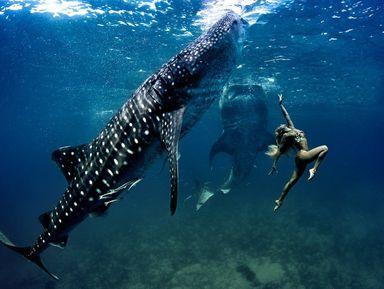 Подводная прогулка с китовыми акулами