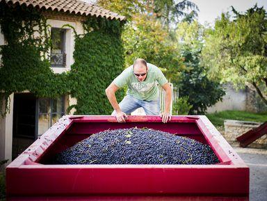 Из Монпелье — на живописную французскую винодельню!