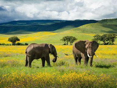Двухдневное сафари в парках Тарангире и Нгоронгоро