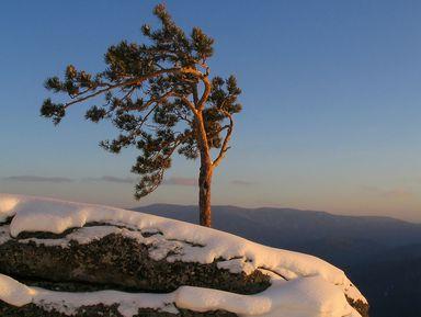 Треккинг к горе Круглая, или плюшевые пейзажи Алтая