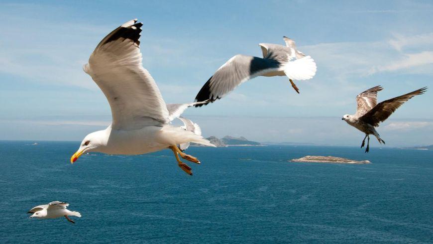 Прогулка под парусом на Каспийском море