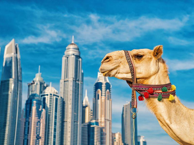 Экскурсия Феноменальный Дубай