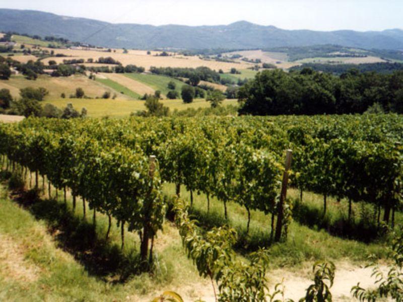 Экскурсия Оценить знаменитые вина Умбрии